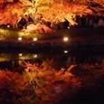 ⑭〝逆さ紅葉〟曽木公園