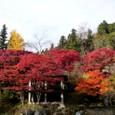 ⑲大井平公園 紅葉
